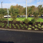 pittsburgh-commercial-landscapers